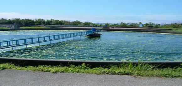 Chlorella farm